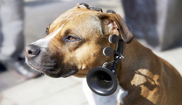 دستگاه مترجم سگ ها